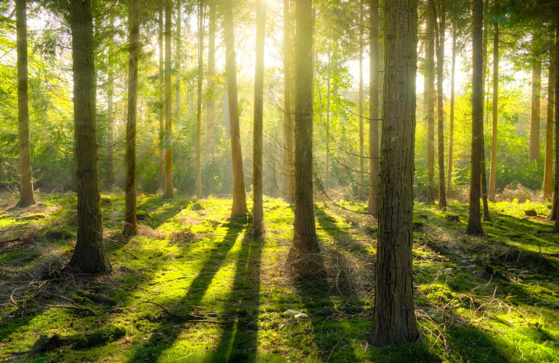 Mindfullness i skoven